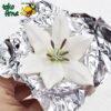 Paku Bunga Lily - Bunga Lili Royal Icing